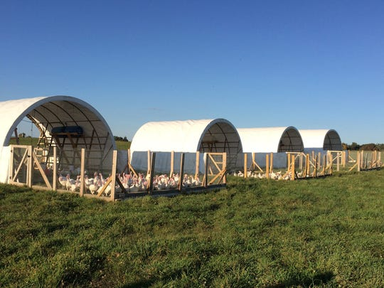 The Family Cow farm has grown from raw milk products to soy-free, organic turkeys shown here at the farm in Greene Township.