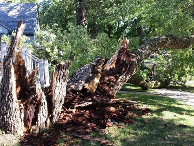 This large tree near McKennan Park was destroyed by a storm that brought 60 mph winds, lightning and up to an inch of rain Sunday, Aug. 24, 2014.
