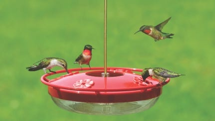 Wild Birds Unlimited in Wausau and Green Bay will be holding seminars for fans of hummingbirds.