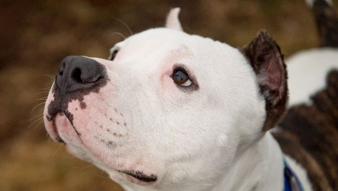 Coco from the Somerset Regional Animal Shelter in Bridgewater.