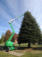 A fir tree from a Madison Township home is prepped before it is removed to be the centerpiece for the Macy's Light Up The Square event in Cincinnati. J