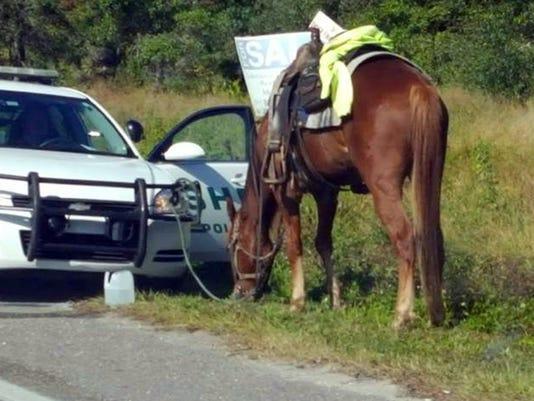 AP DUI HORSE A USA FL