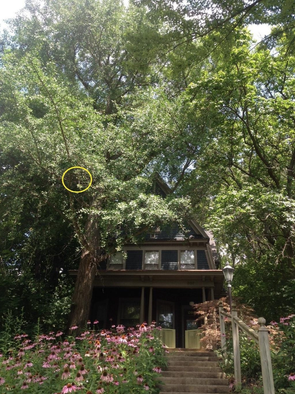 An orange cat was stuck in a tree in front of a home on 9th Street Hill from July 25 - July 28.