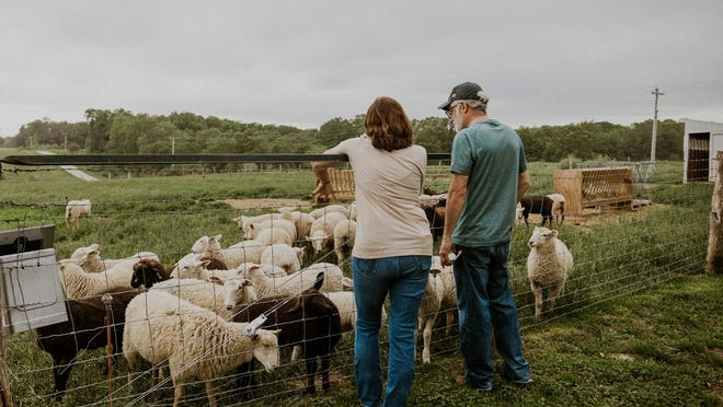 Ann Knowles shows a visitor the new lambs born in April and May at Hickory Grove Farm.