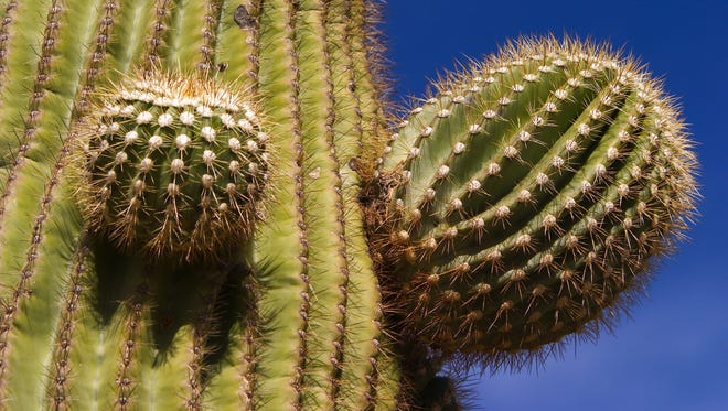 The desert can be a spiny, dangerous place — but it can also be a place of great beauty.
