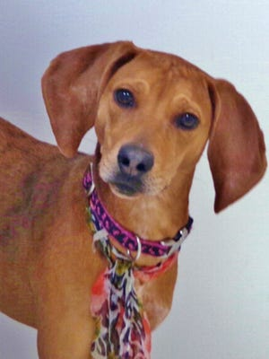 Tulip is a sweet, 8-month-old hound mix who has a lot of energy and the dearest face. She wags her whole body when she meets new people. Tulip needs out of a kennel and into a loving home.