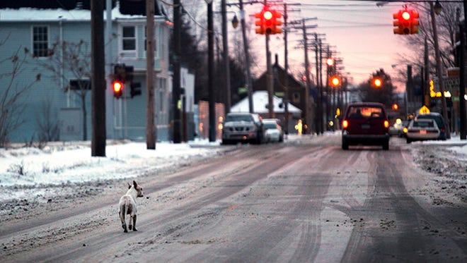A stray dog wanders down Junction street in southwest Detroit on Jan. 12, 2011.