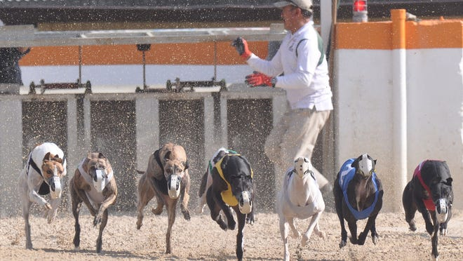 Greyhounds are released from the starting gate at the Naples-Fort Myers Greyhound track on Saturday.