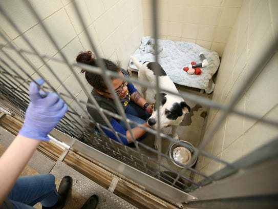 Animal care staff member Toya Welch pets a young shepherd mix named Tuffy.