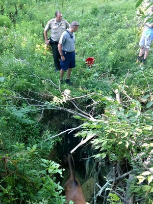 Here are crews rescuing Boomer the horse from a 10-foot sinkhole.