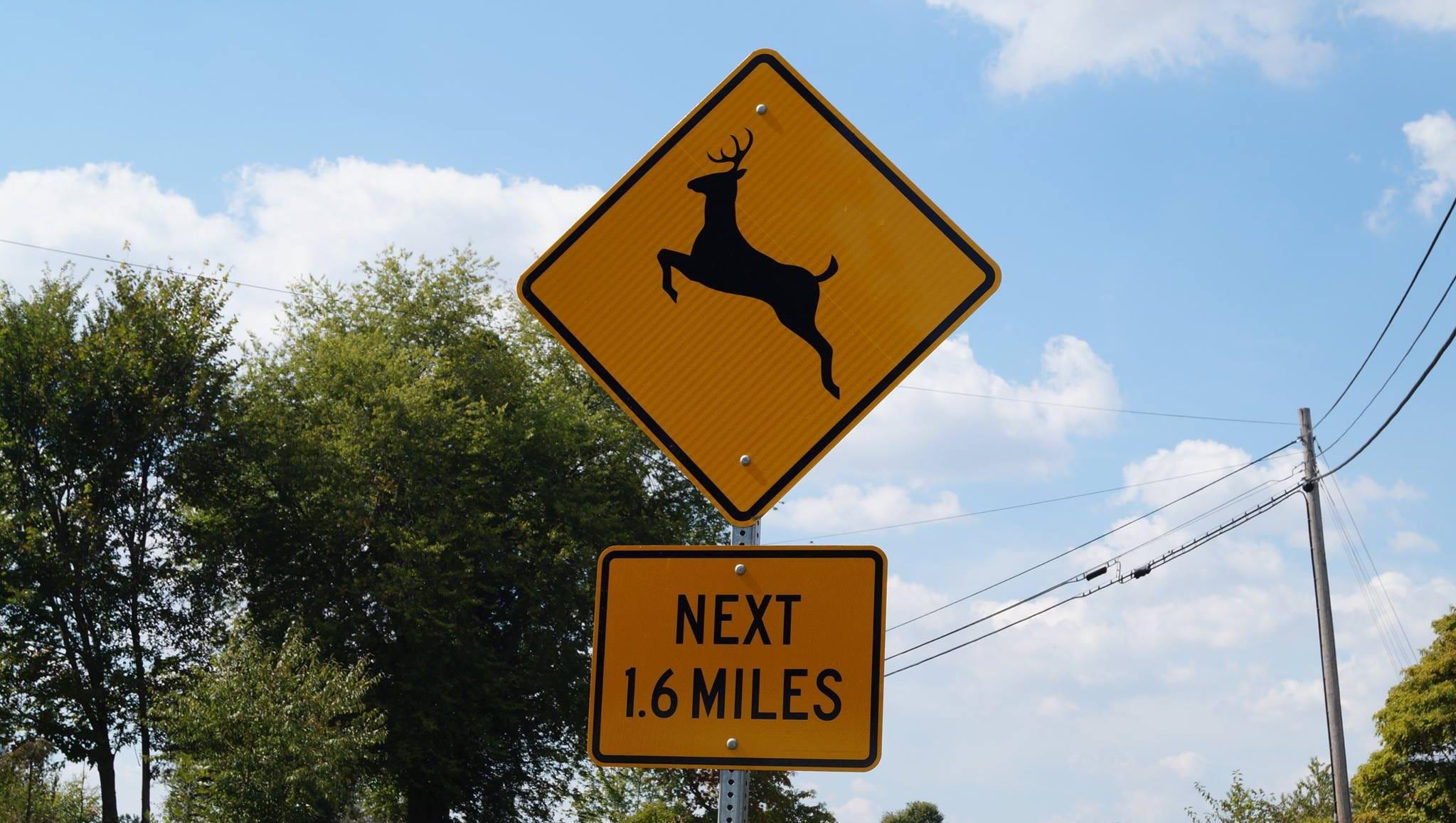Peak time for deer collisions