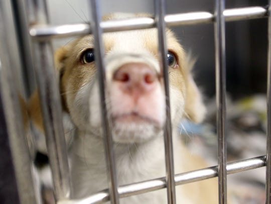 A dog plays in its kennel Thursday, July 13, 2017,