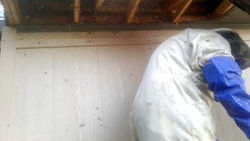 Doña Ana woman finds nearly 100,000 'killer bees' in storage space