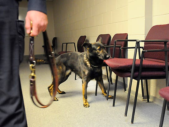 Kato, K-9 unit dog, picks up on a scent hidden between