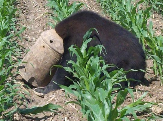 1404702728000-Black-Bear