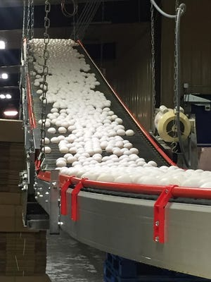 This undated photo provided by Katie Coyle shows eggs on a conveyor belt coming in from an Iowa chicken house. The bird flu outbreak has caused the U.S. Department of Agriculture to approve importing egg products from the Netherlands to be used for baking and in processed foods. A third of the supply disappeared in recent weeks because of the H5N2 virus which spread through Midwest egg farms including many in Iowa, the nation's leading egg producer.
