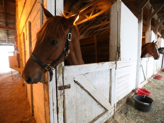 Horses trained by James Jackson are bedded in the stables at Hazel Park Raceway, which closed.