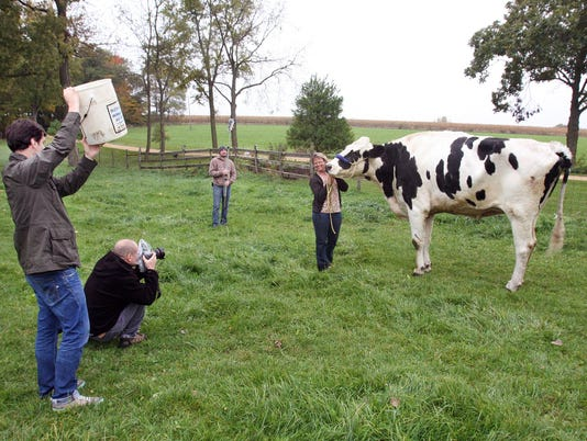 AP WORLD RECORD COW A FEA USA IL