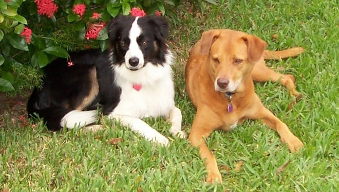 Dale and Jesse,  Cissy Sumner's dogs, in 2006.