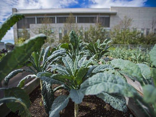 Garden Atrium, the new restaurant at the University