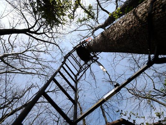 2-YDR-KP-042216-trees
