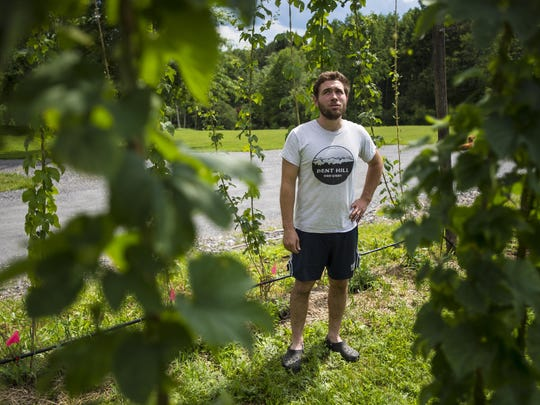 Bent Hill Brewery owner and head brewer Michael Czok surveys his hops crop in Braintree on Friday, July 15, 2016.