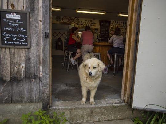 Stack O' Lee greets patrons at Brocklebank Brewery's