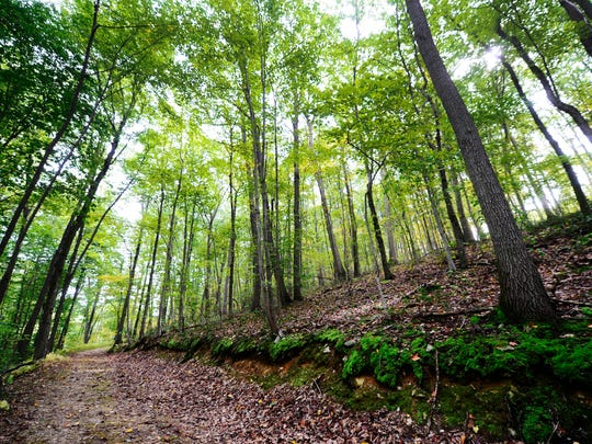A steep trail takes hikers from the Turkey Hill Trail into the Chestnut Grove Natural Area in Manor Township, Lancaster County Wednesday, September 21, 2016.