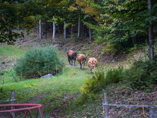 Steve and Wendy Judge have a small-three cow farm in