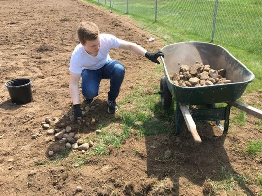 Matthew removes rocks from the soil at The Giving Garden.