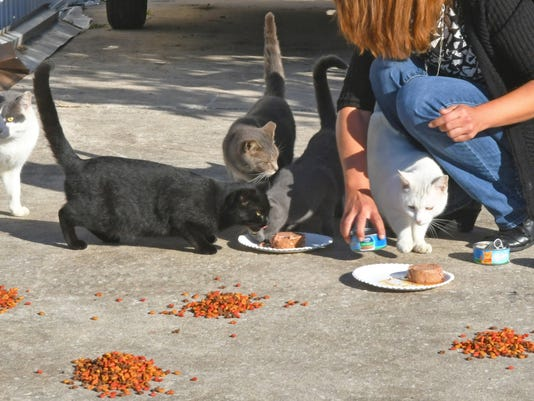 Stray cats in Sharpes