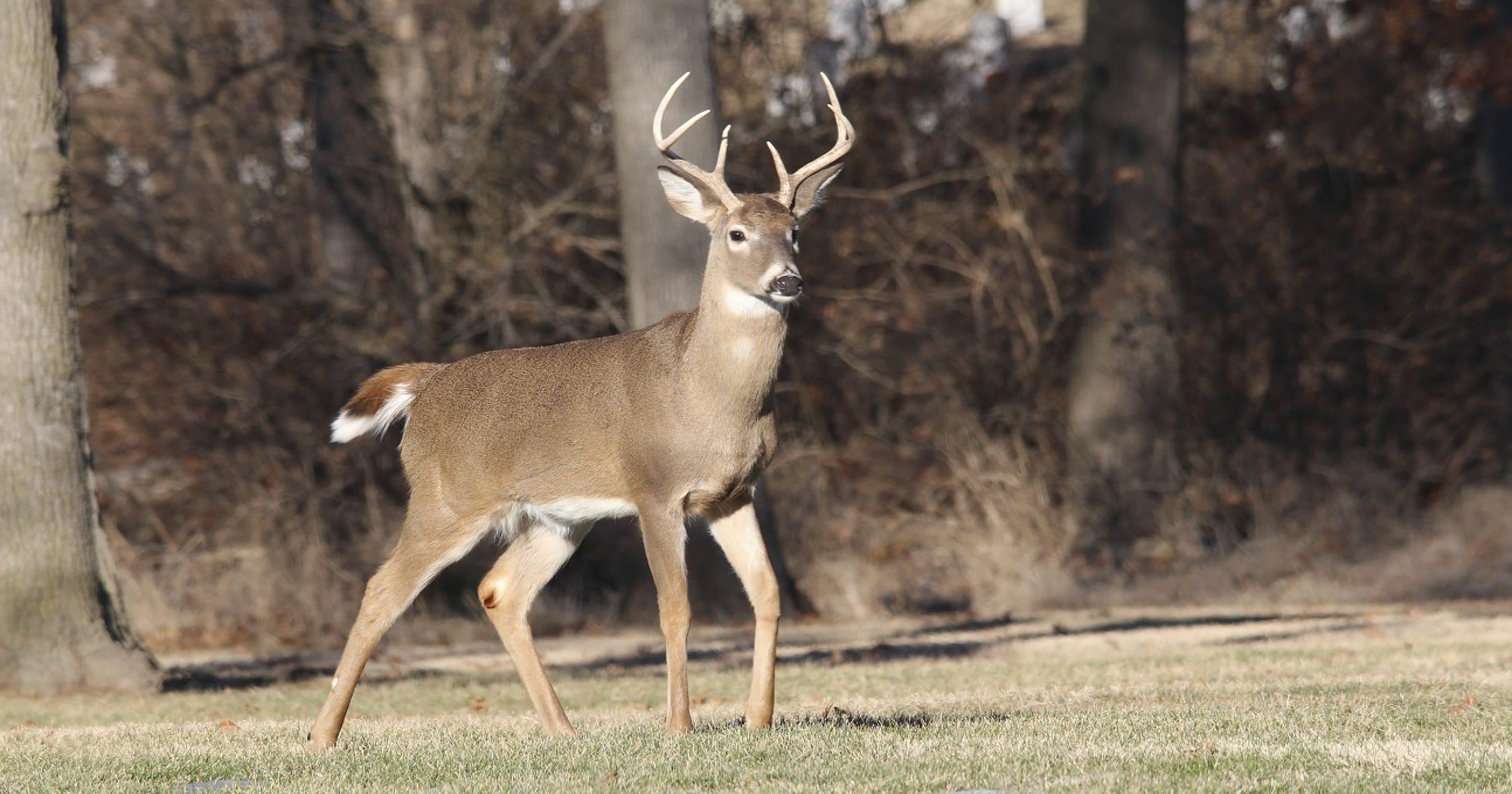 Car Sends Deer Flying, Deer Hits Pedestrian