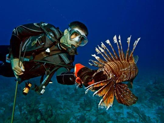 web - lionfish spear