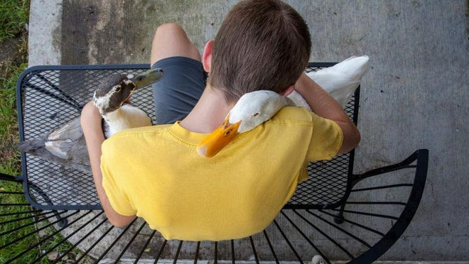 A 12-year-old western Michigan boy with autism is able to keep his ducks, which are his emotional support animals, after Georgetown Township officials approved a variance to an ordinance banning them as pets.