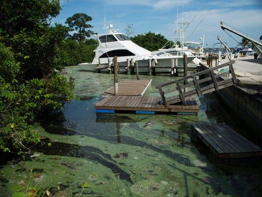 Algae pollution at Central Marine Stuart was matting