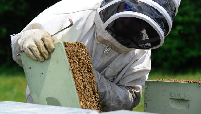 Erik Thompson, owner of First State Apiaries, examines his beehives located in Felton.