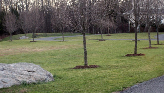 The main benefit from the ring of mulch around each of these trees is to keep the lawnmower from thrashing at their bark in New Paltz, N.Y. Mulches also help conserve water by slowing evaporation from the soil surface.
