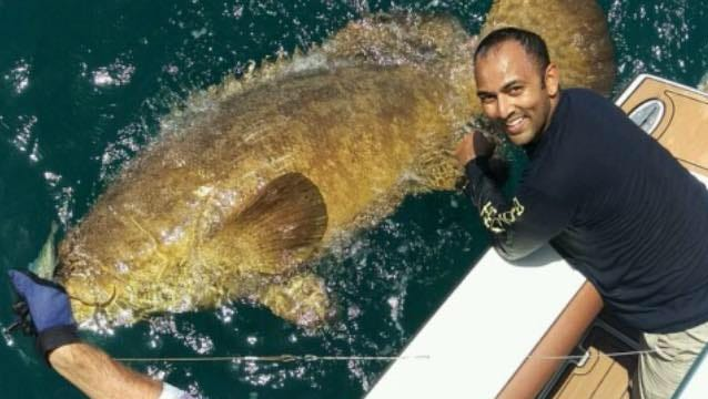 Milton fireman Stephen Rampersad, right, nearly took a swim while trying to reeling in this 400-pound goliath grouper. Charter boat Capt. Ben Chancey is excited, too.