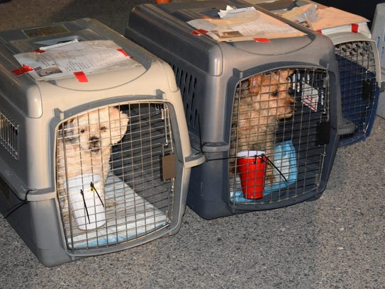 El Paso Animal Services shelter pets are loaded onto