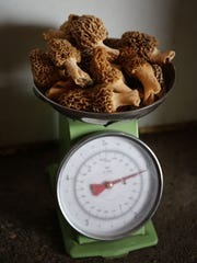 magic of morels_007