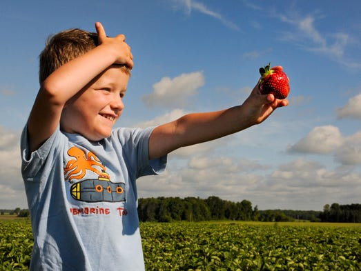 Owen Cisler, 4, of Larrabee shows his dad Chris (not pictured) a big strawberry he just picked at Wilfert Farms' u-pick field on Sunset Drive in Two Rivers. Sue Pischke/HTR Media. Photo taken on Tuesday, July 1, 2014.