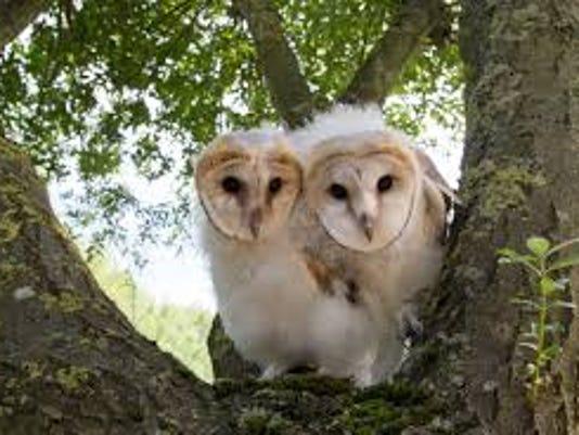owlpower.jpg