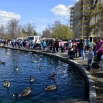 A sizeable crowd gathers to watch the annual water fowl release at Gibson Pond this spring.