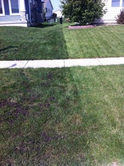The darker green lawn has undergone soil quality restoration — in which the lawn is aerated, then compost is laid down, eventually making its way into the soil, improving the overall health.