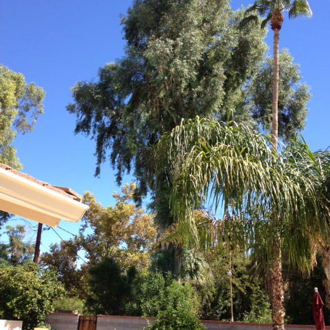 A neighbor's towering  eucalyptus tree has one reader nervous about the risk if it falls onto his property. An ISA-certified arborist can give a professional evaluation of the possible risk.