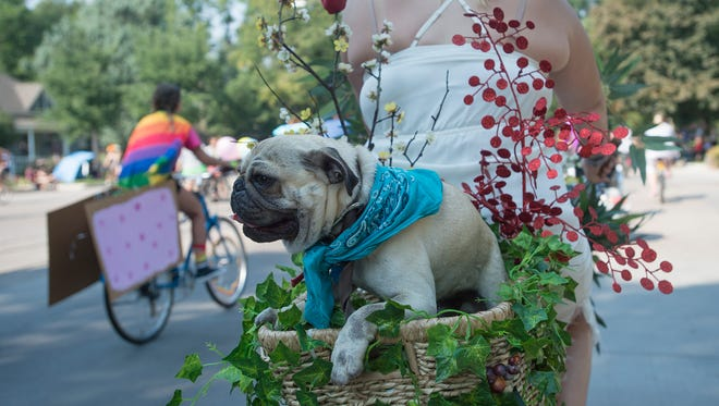 This costumed pug took to the streets for Tour de Fat in 2017. But expect to see many more for a Halloween pug parade on October 28 in Fort Collins.