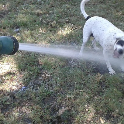 "Don't let Fido drink from the garden hose unless it's labeled ""drinking water safe."""