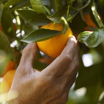 Concerns over the 'produce rule'