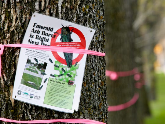 Information abou the emerald ash borer is posted on trees Wednesday, May 21, 2014, along 13th Avenue South, Fargo, N.D.