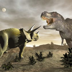 If you could go back in time, when and where would you go? Roaming with the dinosaurs, perhaps?